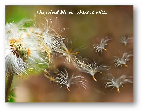 blowing wind